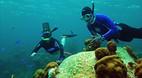 Pelican Cays Land an..