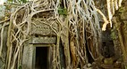 Ta Prohm