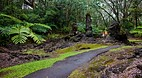 Lava Tree State Park