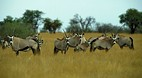 Pilanesberg National..