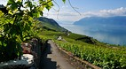 Lavaux